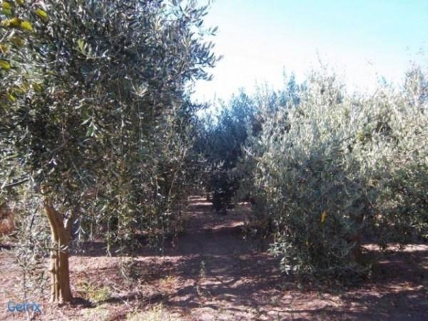 Terreno Agricolo in vendita a Villaputzu, 9999 locali, prezzo € 35.000 | CambioCasa.it