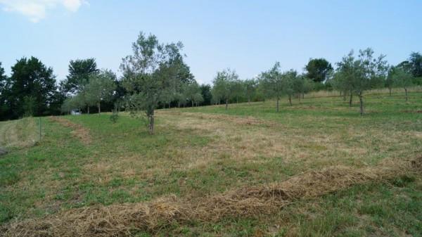 Terreno Agricolo in vendita a Caiazzo, 9999 locali, prezzo € 33.000 | Cambio Casa.it