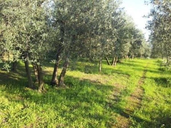 terreno  in Vendita a Arezzo