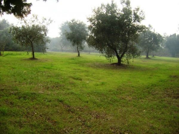 Bilocale Latiano Agro 3