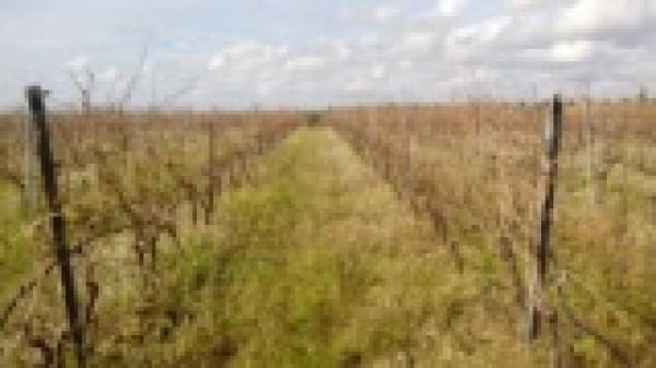 Terreno commerciale in Vendita a Menfi Periferia: 16000 mq