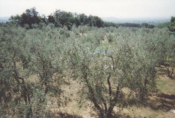 Bilocale Capannori Via Segromigno In Monte 2