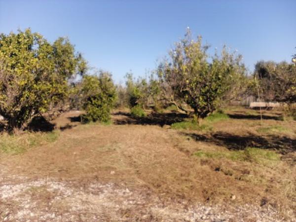Terreno Agricolo in vendita a Partinico, 9999 locali, prezzo € 35.000 | CambioCasa.it