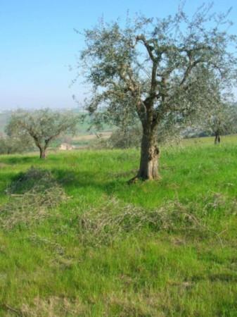 Terreno residenziale in Vendita a Montescudo Periferia: 4500 mq