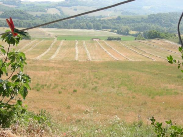 Rustico in Vendita a Bibbona: 5 locali, 300 mq