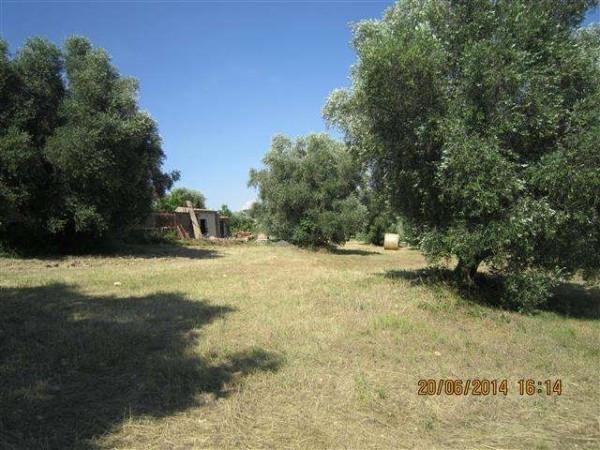 Terreno Agricolo in vendita a Monte Romano, 9999 locali, prezzo € 8.000 | CambioCasa.it