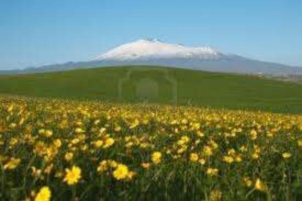 Terreno residenziale in Vendita a Mascalucia Periferia: 960 mq