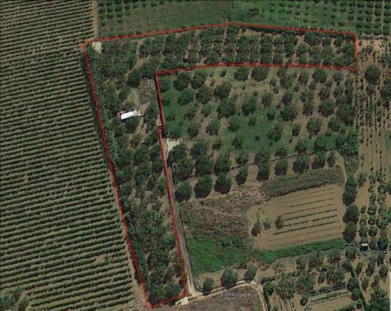 Terreno Agricolo in vendita a Partinico, 9999 locali, prezzo € 38.000 | Cambio Casa.it