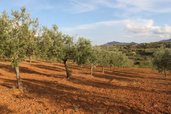 Terreno Agricolo in vendita a Partinico, 9999 locali, prezzo € 150.000 | Cambio Casa.it