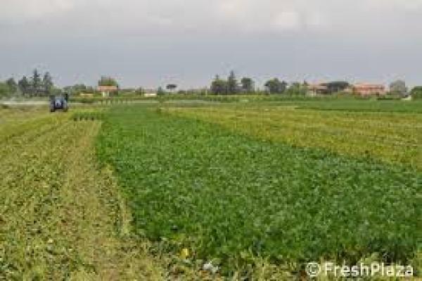 Terreno commerciale in Vendita a Rimini Periferia Sud: 2500 mq