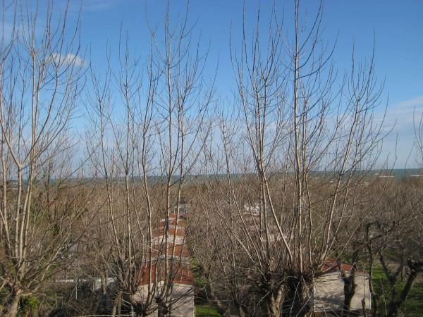 Bilocale Chioggia Via Venier Sebastiano 8