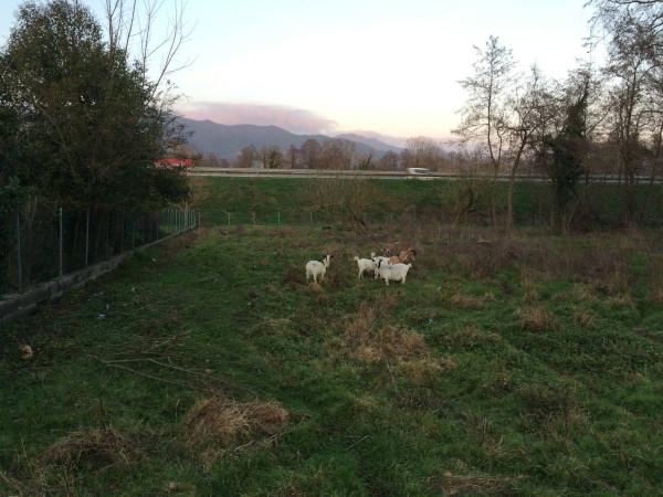 Terreno Agricolo in vendita a Montignoso, 9999 locali, prezzo € 20.000   Cambio Casa.it