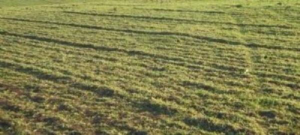 Terreno Agricolo in vendita a Novi di Modena, 9999 locali, prezzo € 25.000 | Cambio Casa.it