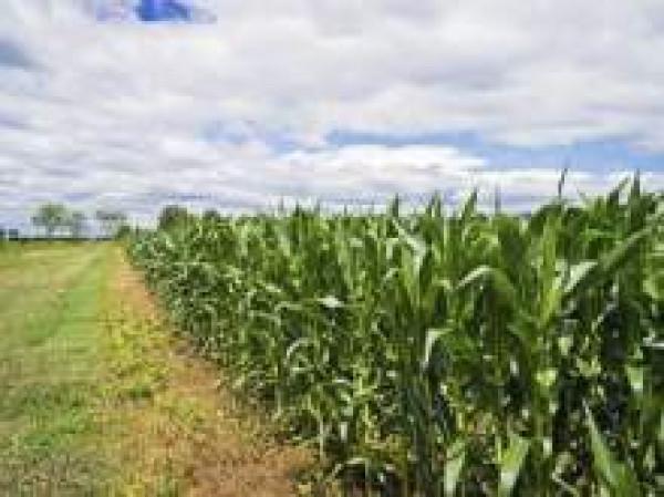 Terreno Agricolo in vendita a Candia Canavese, 9999 locali, prezzo € 30.000 | CambioCasa.it