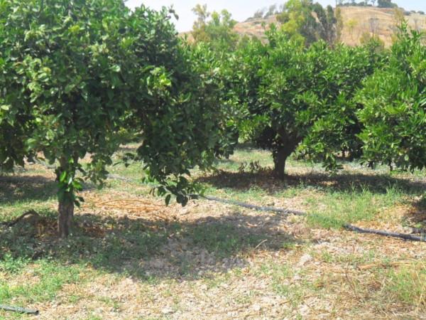 Terreno Agricolo in vendita a Ribera, 9999 locali, Trattative riservate | Cambio Casa.it