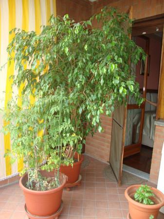 Bilocale Santena Via Trinità 11