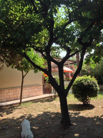 Bilocale Montemarciano  10