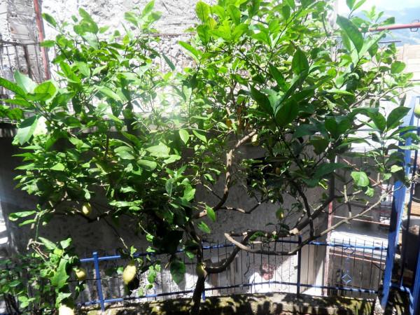 Bilocale Maratea Via Arenara 7