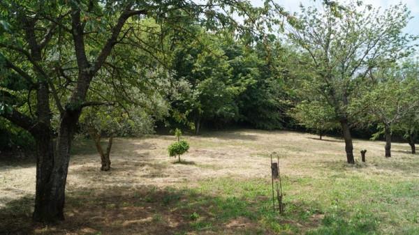 Terreno Agricolo in vendita a Dragoni, 9999 locali, prezzo € 25.000 | Cambio Casa.it