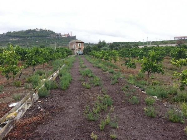 Terreno Agricolo in vendita a Paternò, 9999 locali, prezzo € 155.000 | Cambio Casa.it