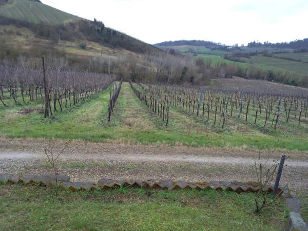 Terreno Agricolo in vendita a Riolo Terme, 9999 locali, prezzo € 200.000 | Cambio Casa.it