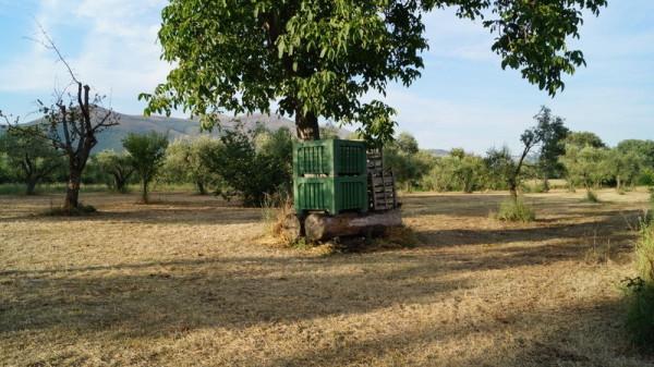 Terreno Agricolo in vendita a Pontelatone, 9999 locali, prezzo € 55.000 | Cambio Casa.it