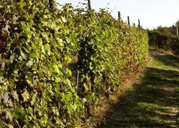 Terreno agricolo in Vendita a Bardolino Rif.6057522