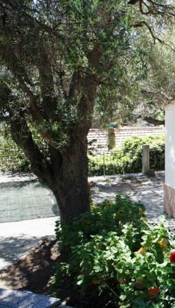 Bilocale Capoliveri Via Pareti 9