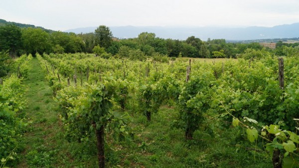 Terreno Agricolo in vendita a Alvignano, 9999 locali, prezzo € 38.000 | Cambio Casa.it
