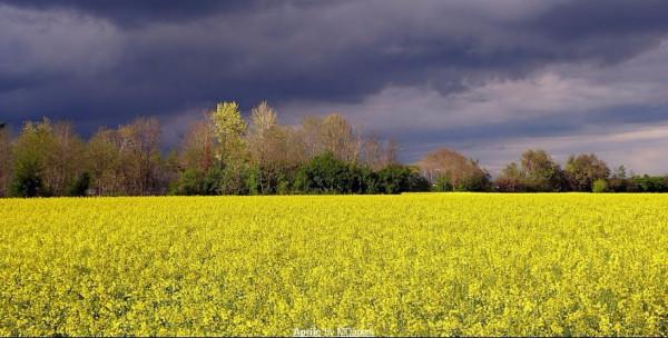 Terreno agricolo in Vendita a Verona Rif.7152818