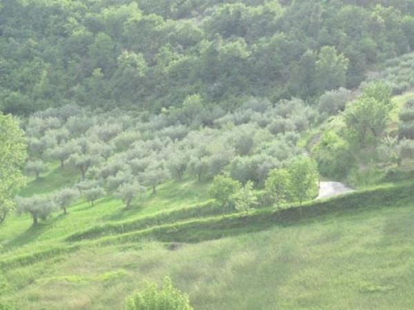 Terreno Agricolo in vendita a Montorio al Vomano, 9999 locali, prezzo € 24.500 | Cambio Casa.it