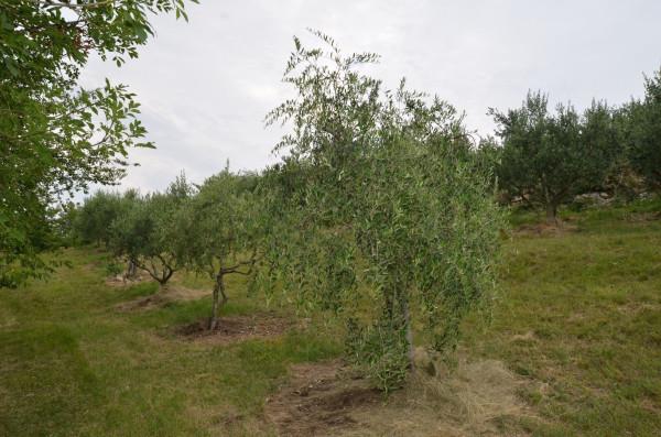 Terreno Agricolo Rif.7439497