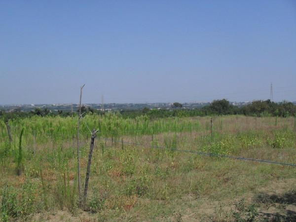 Terreno Agricolo in vendita a Giugliano in Campania, 9999 locali, prezzo € 35.999 | Cambio Casa.it