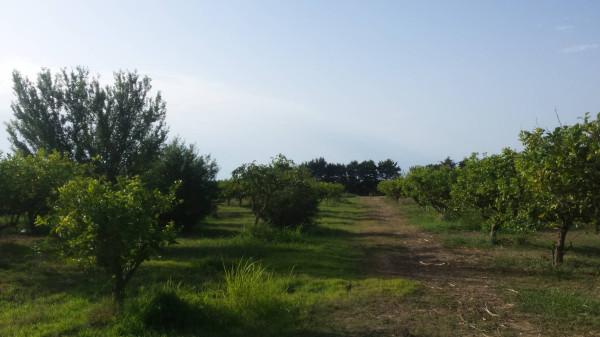 Terreno Agricolo in vendita a Partinico, 9999 locali, Trattative riservate | Cambio Casa.it
