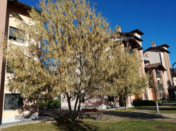 Bilocale Cassina de Pecchi  1