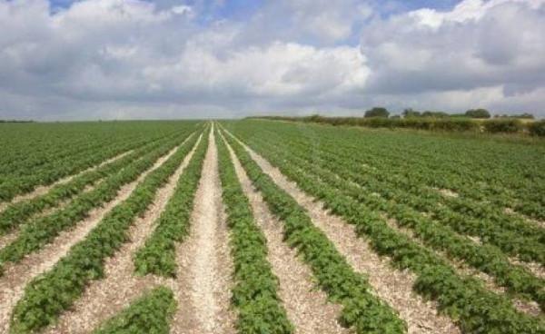 Terreno Agricolo in vendita a Foggia, 9999 locali, prezzo € 400.000 | Cambio Casa.it