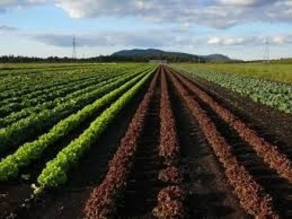 Terreno Agricolo in Vendita a Foggia