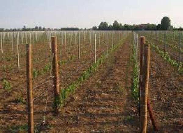Terreno Agricolo in vendita a Sant'Arpino, 9999 locali, prezzo € 100.000 | Cambio Casa.it