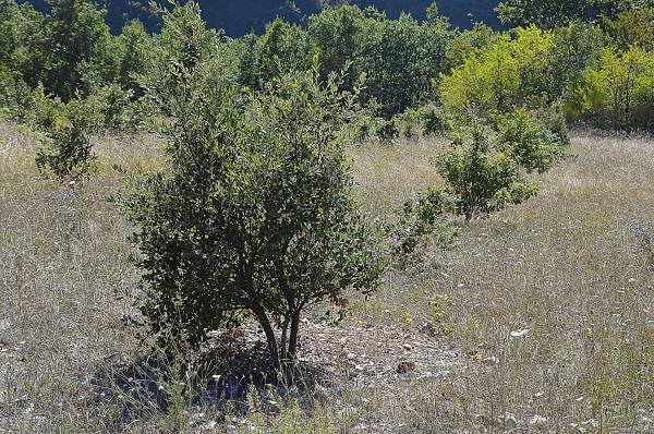 Terreno agricolo in Vendita a Preci Rif.9298864