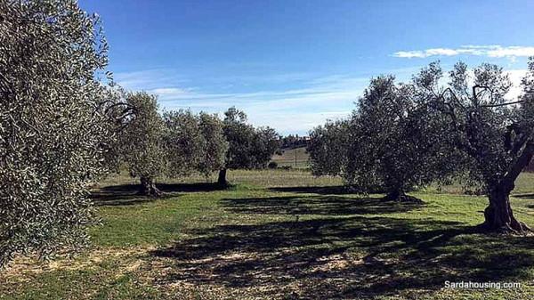 Terreno Agricolo in vendita a Serdiana, 9999 locali, prezzo € 30.000 | Cambio Casa.it