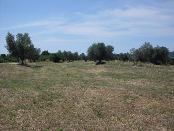 Terreno Commerciale in Vendita a Canino Rif.9626903