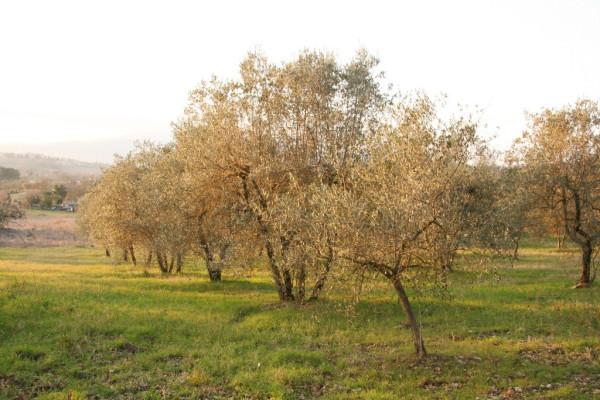 Terreno commerciale in Vendita a Arezzo: 66795 mq