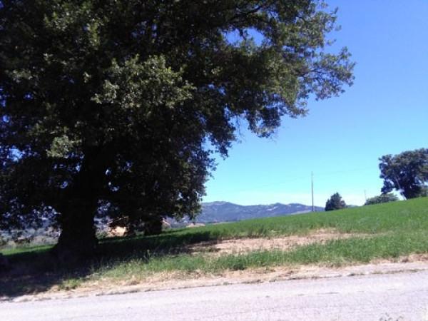 Terreno Agricolo in vendita a Colledara, 9999 locali, prezzo € 16.500 | Cambio Casa.it
