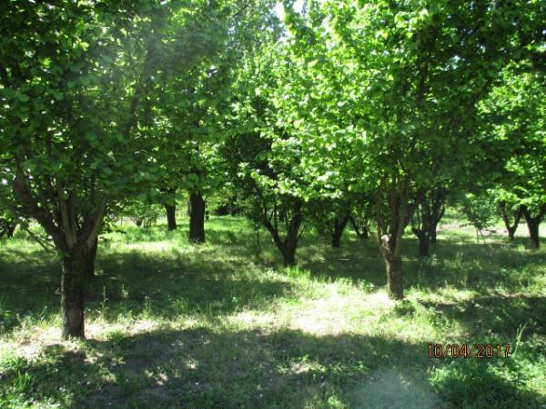 Terreno Agricolo in Vendita a Montoro