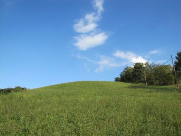 Terreno Agricolo in vendita a Basciano, 9999 locali, prezzo € 35.000 | Cambio Casa.it