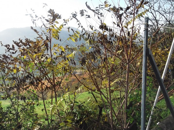 Bilocale Castell Arquato Via Pasubio 8