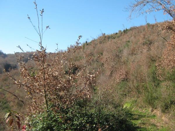 Terreno Agricolo in vendita a Conca della Campania, 9999 locali, prezzo € 37.000 | Cambio Casa.it
