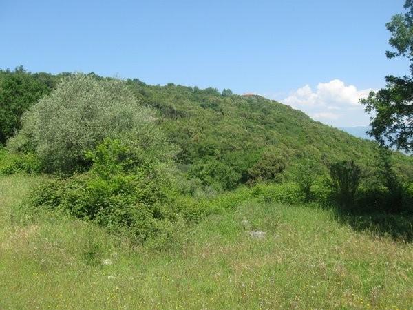 Terreno Agricolo in vendita a Alvignano, 9999 locali, prezzo € 150.000 | CambioCasa.it