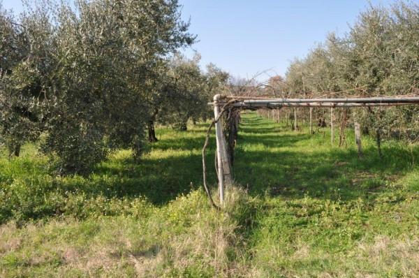 Terreno Agricolo in vendita a Fonte Nuova, 9999 locali, prezzo € 35.000 | Cambiocasa.it