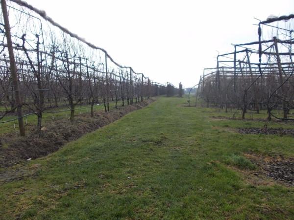Terreno Agricolo in vendita a Anzola dell'Emilia, 9999 locali, prezzo € 150.000 | CambioCasa.it